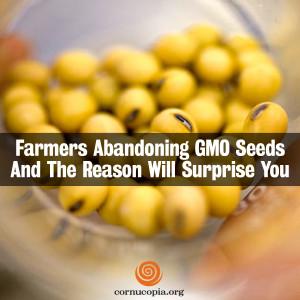 Farmers Abandoning GMO Seeds