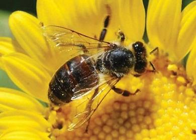 Honey-Bee 6
