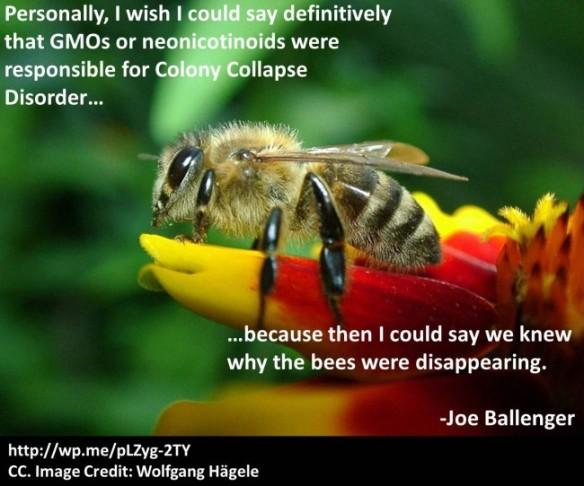Honey-Bee 7