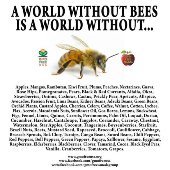 Honeybees-A world without