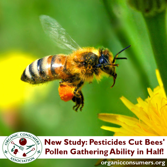 Honey Bee - Pesticides Cut in Half